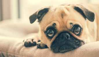 adorable animal breed canine